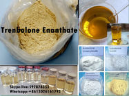 चीन Yellow Steroid Powder Trenbolone Enanthate for Bodybuilding with Good Quality कंपनी